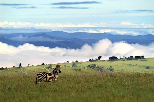 Nyika Plateau National Park