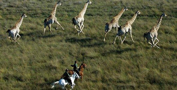 Experience the Okavango Delta on a horse-back safari