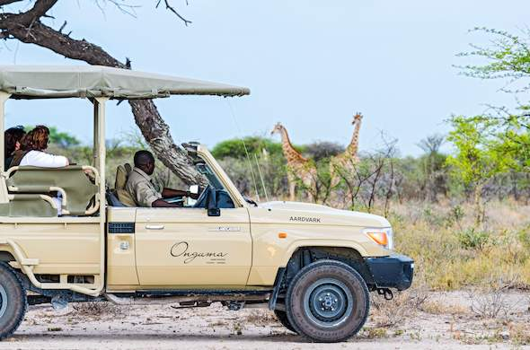 Spotting giraffes during a game drive in Onguma Game Reserve.