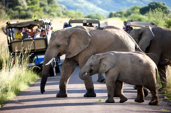 Elephant and calf spotted during game drive.