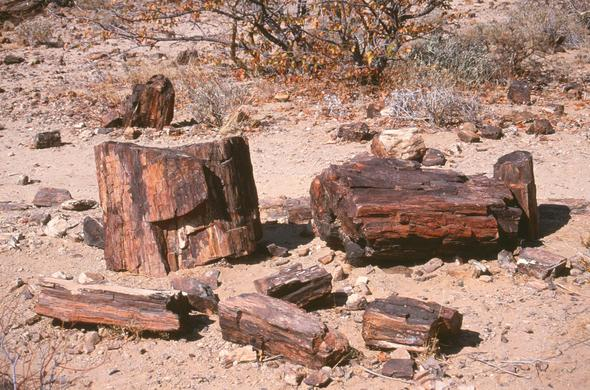 Sections of a petrified tree in Namibia's Petrified Forest. Leigh Kemp