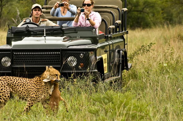 See Leopard while on a game drive at MalaMala.