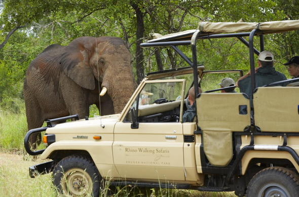 Go on exciting guided game drives in Kruger National Park.