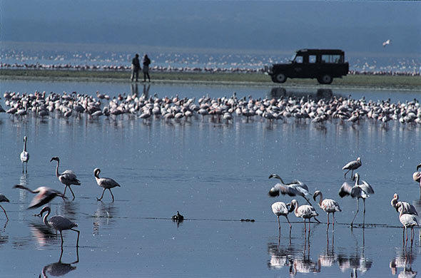 Flamnigos of Lake Nakuru.