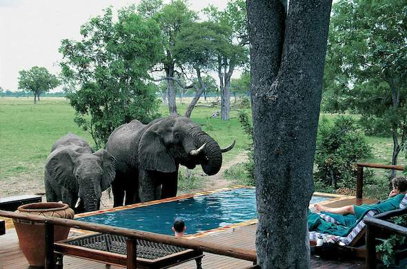 Elephants stop by the swimming pool at Ruckomechi Camp. Mana Pools
