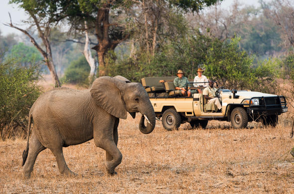 See Elephant while on a guided game drive in South Luangwa.