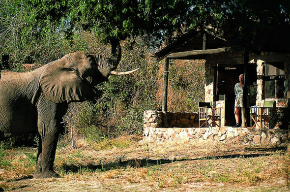 Elephant at your doorstep at Ruaha River Lodge