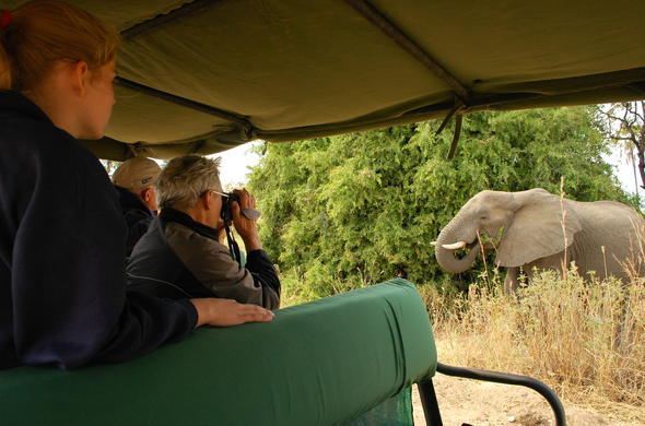 Ruaha River Lodge offers game drives in Ruaha National Park.
