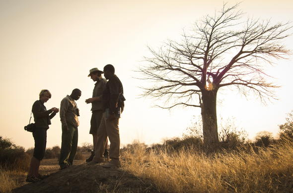 Ruaha walking safari.
