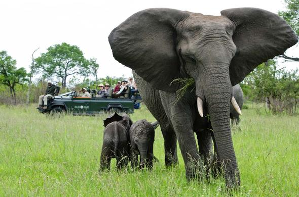 Mother elephant and baby in Sabi Sand Reserve.