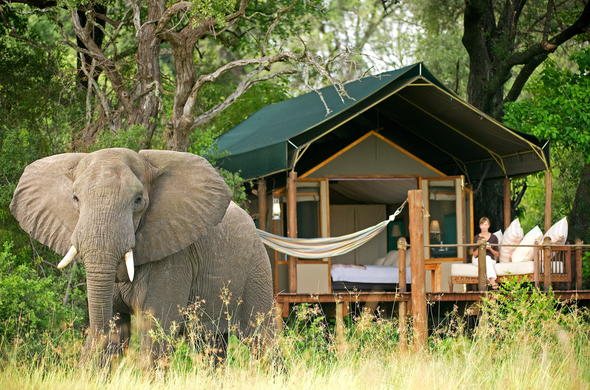 Elephant in front of your accommodation at Stanleys Camp.
