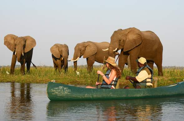 Canoeing with elephants in Africa.