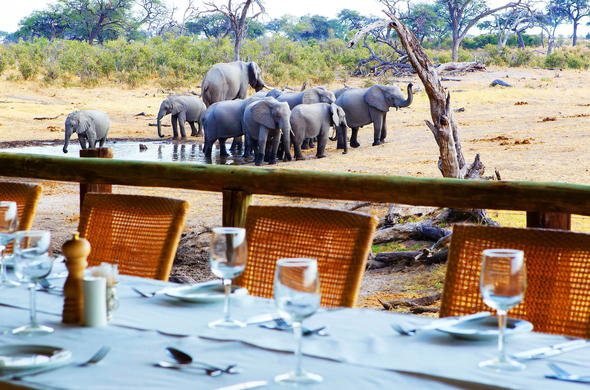 Watch elephants at waterhole during dinner.