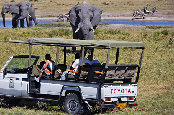 Guests view elephant on a game drive activity.