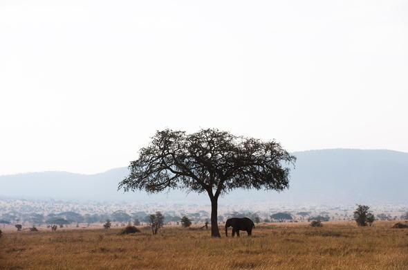 wildebeest camp tanzania