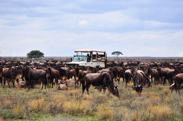 Game drive during the Wildebeest Migration in Tanzania.