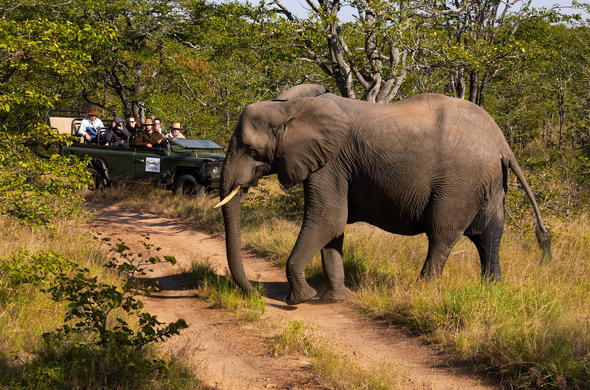 Elephant sighting on a game drive.