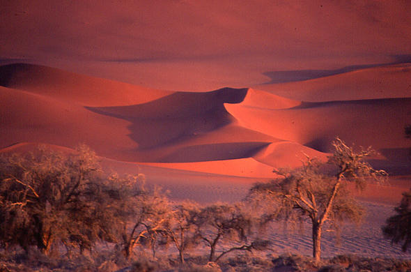 Dunes of Sossusvlei in Namibia at sunset.
