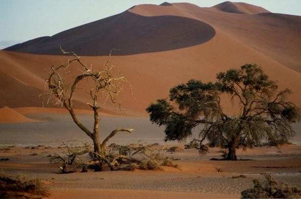 Dunes of the Namib Desert.