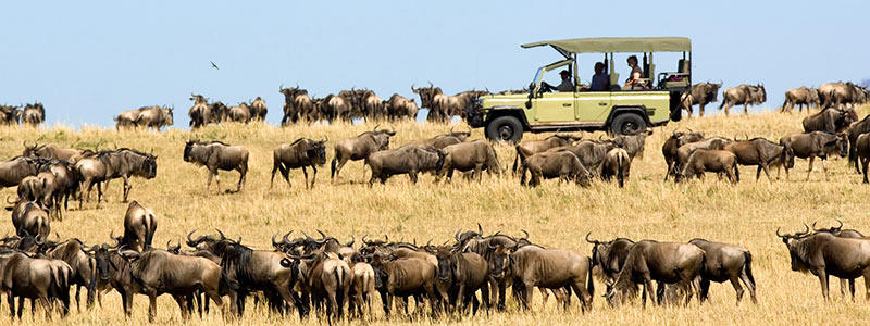 Tanzania serengeti great migration.
