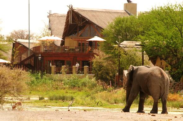 tau game lodge madikwe game reserve south africa safarielephant on the tau game lodge premises