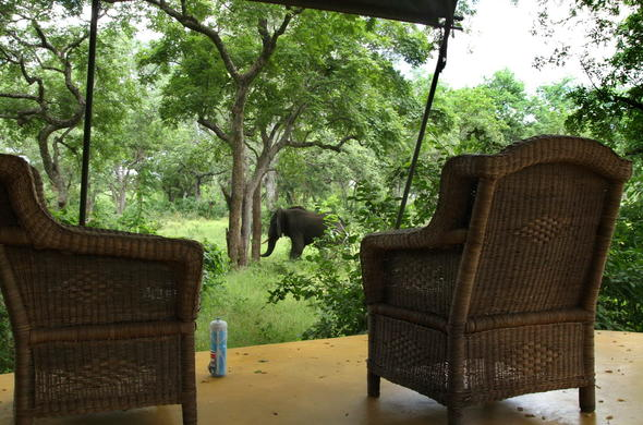 Observe the occasional elephant passing through Thawale Lodge.