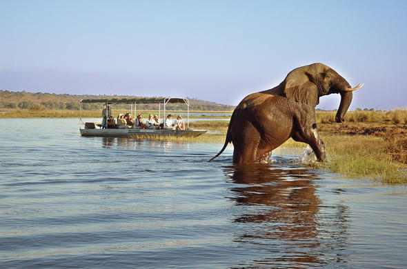 See elephant while on a guided boat safari.