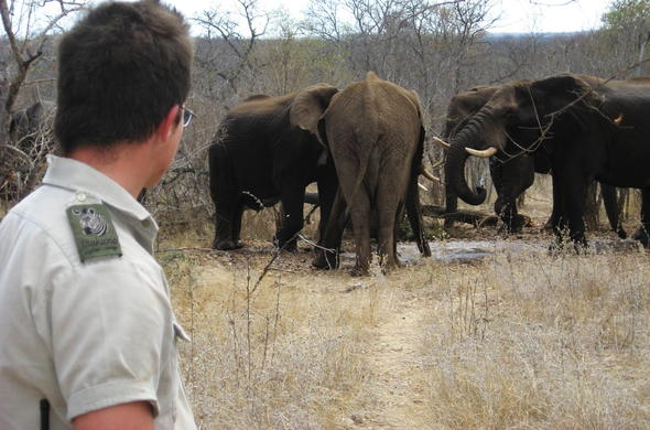 Walking safaris let you get close to Elephant and wildlife.