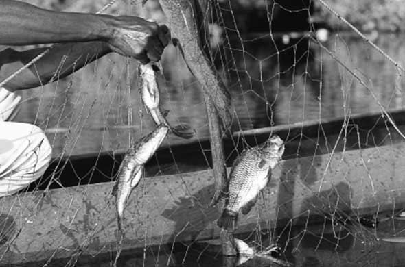 Gill nets are indiscriminate in what they kill. Ian Michler