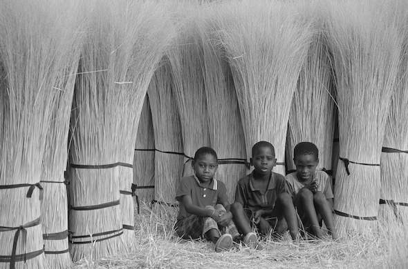 Boys amongst the papyrus harvest. Ian Micheler