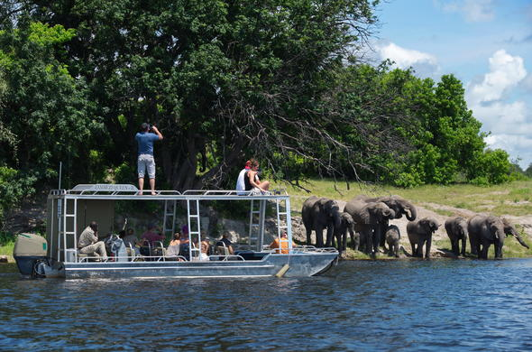 Game viewing on the Zambezi Queen.